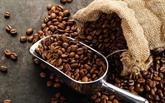 Café : plus de 1,6 milliard d'USD d'exportation au 1er semestre