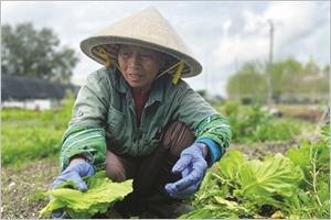 Les Vietnamiens de la Nouvelle-Orléans une diaspora soudée