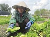Les Vietnamiens de la Nouvelle-Orléans, une diaspora soudée