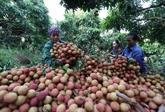 Les exportations de fruits et légumes atteignent près de 2 milliards d'USD en sept mois