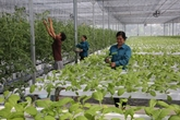 Hanoï appelle à investir dans des projets agricoles de haute technologie