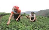 Thanh Hoa : l'agroforesterie pour lutter contre la pauvreté
