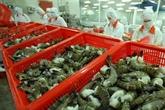 Croissance des exportations de crevettes vietnamiennes en République de Corée