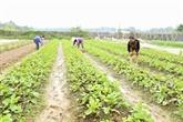Hanoï fait vivre son agriculture bio