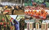 EVFTA, un accord favorable au commerce vietnamo-européen