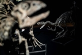 Un premier diagnostic de cancer chez un dinosaure