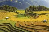 Immersion insolite dans les rizières en terrasses