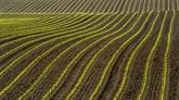 L'agriculture et l'alimentation dotées de 1,2 milliard d'euros dans le plan de relance