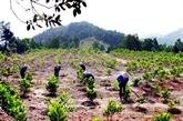 Élaboration d'un projet de zonage et de protection des forêts naturelles