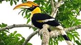 Le Vietnam déterminé à éliminer tous les actes nuisibles des oiseaux migrateurs