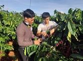 Dak Doa souhaite exporter son café organique