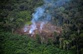 43 millions d'hectares perdus sur les principaux