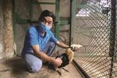 À Thao Câm Viên, les animaux sont aidés pour surmonter la crise du COVID-19