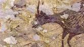 La plus ancienne peinture rupestre découverte dans une grotte