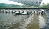 L'Australie soutient le suivi environnemental des mangroves pour l'aquaculture à Cà Mau
