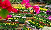 Quang Binh : 122 millions d'euros pour le Festival international des fleurs 2023