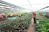 La floriculture change la physionomie de Xuân Quan