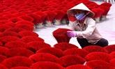 Le village de l'encens de Quang Phu Câu se prépare pour le Têt