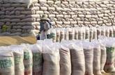 De premières tonnes de riz vietnamien exportées vers le Royaume-Uni