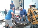 Les exportations de thon bondissent de quatre à cinq fois