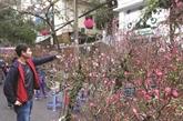 Les cinq marchés aux fleurs du Têt réputés de Hanoï