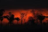 Brésil : les incendies de forêt au plus haut en dix ans