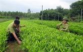 Lang Son renforce sa politique de reboisement et de développement de la sylviculture