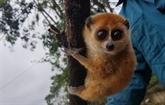 Quang Nam : élargir l'habitat et diversifier les sources de nourriture pour les animaux rares