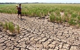 Delta du Mékong : le niveau de salinité au plus haut niveau en février et mars