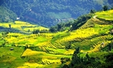 Ngai Ngau Thuong, le plus haut village du Vietnam