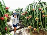 Le Vietnam cherche à élargir les marchés d'exportation des produits agricoles