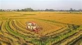 Le Vietnam exporte 4,57 millions de tonnes de riz en neuf mois