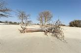 Climat en Afrique : menace pour la survie de millions de personnes, selon l'ONU