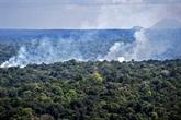L'Amazonie a perdu 74,6 millions d'hectares de végétation indigène entre 1985 et 2020