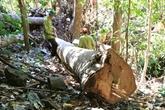 Vietnam - États-Unis : accord sur le contrôle de l'exploitation et du commerce illégaux de bois
