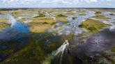 Les marécages des Everglades, un joyau de Floride menacé par le changement climatique
