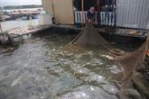 Développement des infrastructures pour l'aquaculture marine
