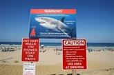 Les requins confondent bien les surfers avec leurs proies animales