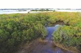 Approbation d'un projet sur la protection des forêts dans les zones côtières