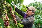 Les pays nordiques, des marchés prometteurs pour le café vietnamien