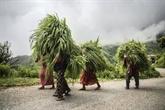 La FAO appelle à une collaboration internationale