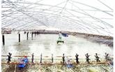 Une crevetticulture en plein essor dans le delta du Mékong