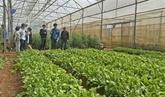L'agrotourisme en plein essor à Lâm Dông