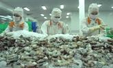 Crevettes : le Vietnam salue la décision des États-Unis concernant Minh Phu Seafood Corporation