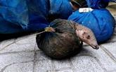 Plus de 1.130 animaux sauvages sauvés au Vietnam en 2020