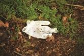 Les déchets plastiques, dommage collatéral du coronavirus