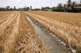 Le delta du Mékong fait face à l'intrusion saline grave
