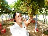 Start-up viticole dans la zone côtière de Bên Tre