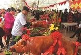 Originalité des fêtes du cochon rôti à Lang Son