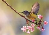 L'arrivée du printemps